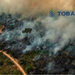 Amazzonia in fiamme: le conseguenze climatiche